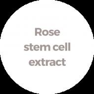 Extracto de células de la  madre de rosa